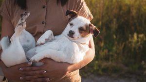 traitement chien